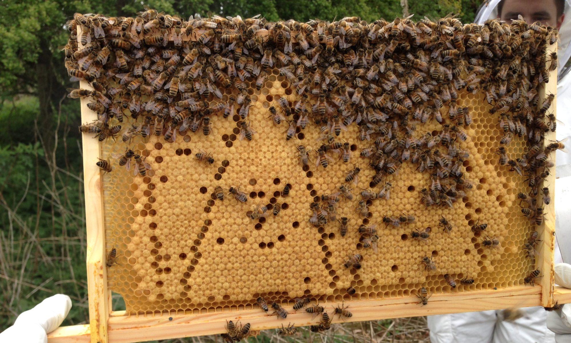 Bee 1st beekeeping supplies